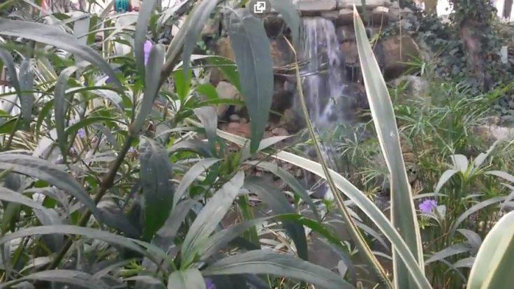 Sihirli Peyzaj Video 21