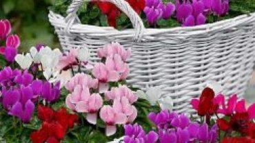Kış mevsiminde çiçek bakımı