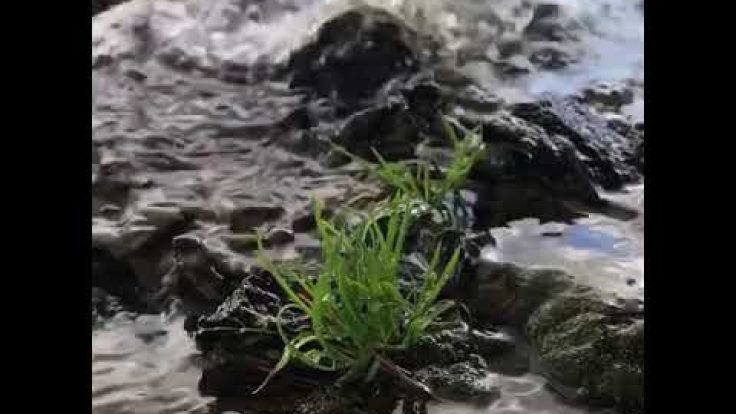 Sihirli Peyzaj Video 36